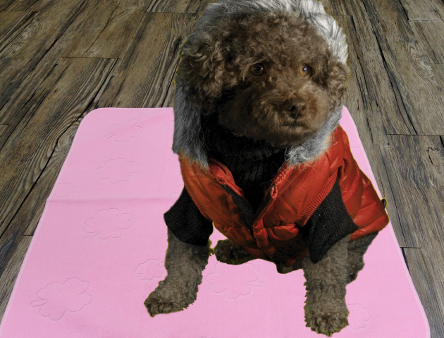 Pet Training Pad 1